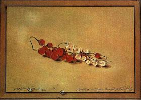 Ягоды красной и белой смородины (Ф. Толстой)